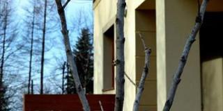 taras_drzewo